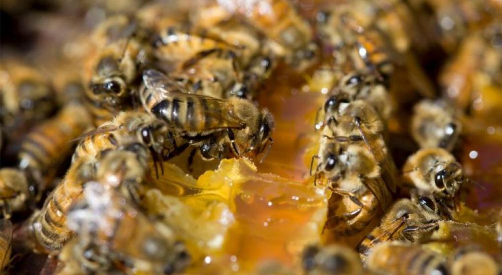 Masivo ataque de abejas durante una misa en Brasil: al menos 58 heridos