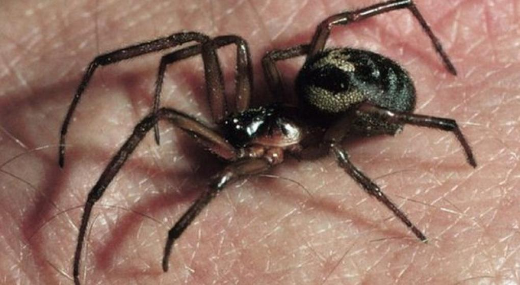 Alerta por arañas obliga a cerrar escuelas en Reino Unido