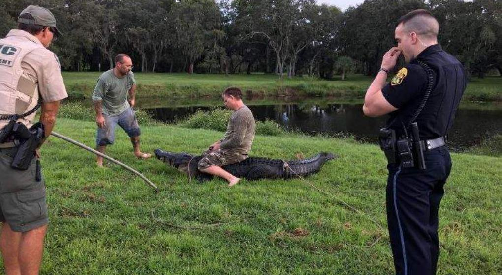 Un caimán mordió a un hombre en un brazo en Florida