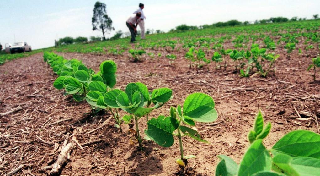 Brotes verdes: después de cinco meses, el campo vuelve a crecer