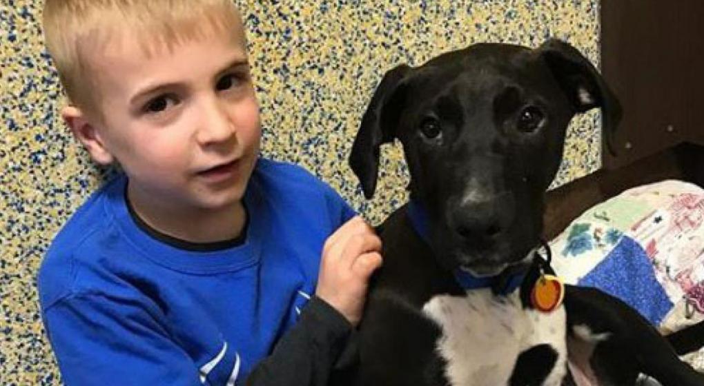 Roman tiene siete años y ya salvó a 1200 perros que iban a ser sacrificados