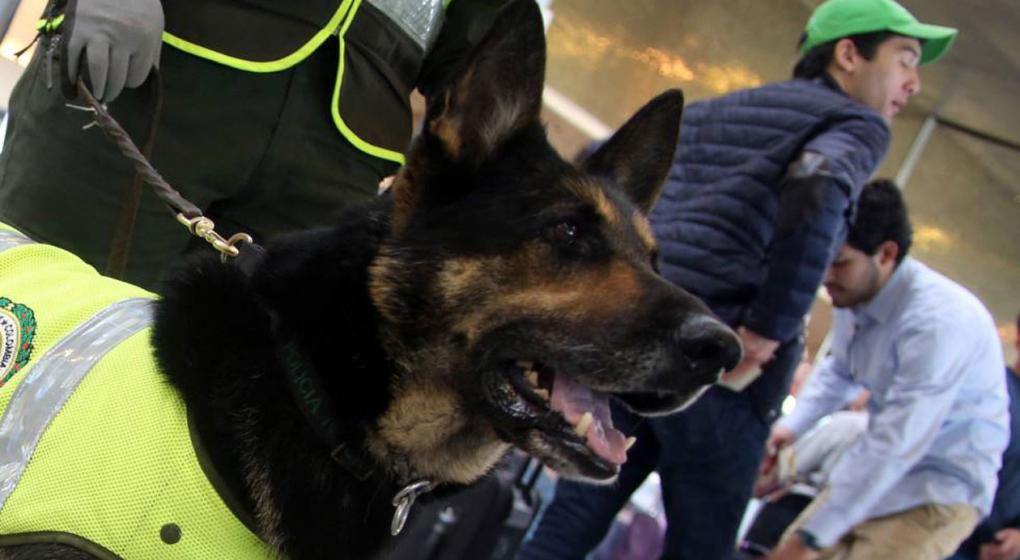 Cartel colombiano pone precio a cabeza de perra policía: la quieren capturada o muerta