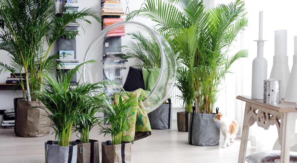 Cuáles son las plantas de interiores más apropiadas para tu casa ...