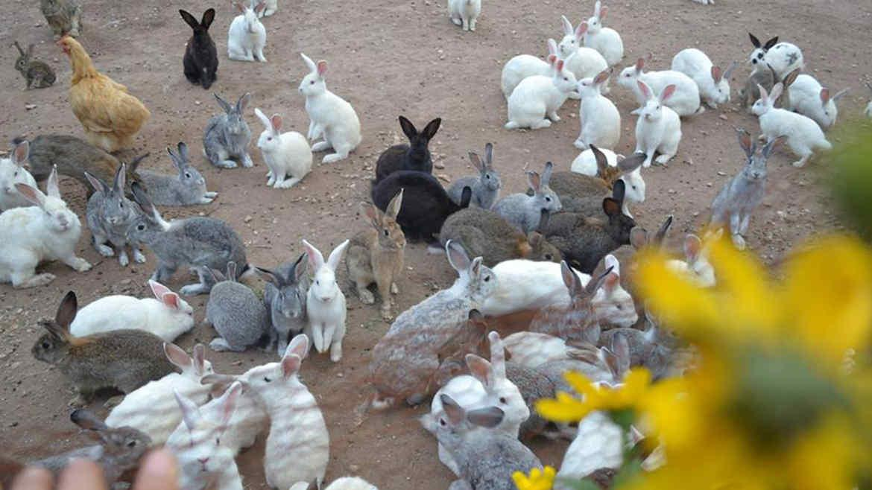 Resultado de imagen para Â¡Hermoso! Un paseo entre conejos en Los Hornillos